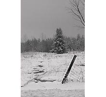 Snowed.............. Photographic Print
