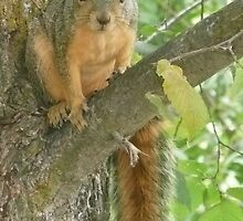 Squirrel on Branch. by Mywildscapepics