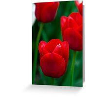 Ile de France Tulips Greeting Card
