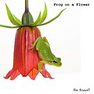 Frog on a Flower by Alex  Bramwell