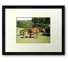 Brumby Mares & Their Foals. Framed Print