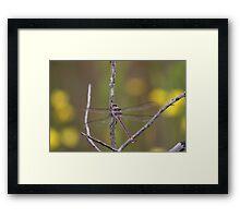 Giant Dragonfly Framed Print