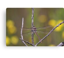 Giant Dragonfly Canvas Print