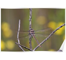 Giant Dragonfly Poster
