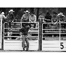 Broncos and Bulls # 2 Photographic Print