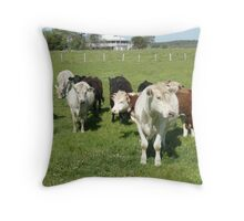 Group of Curious Cows in Green Paddock. Throw Pillow