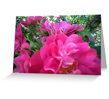 Bright Pink Magenta Purple Rose Blossoms Greeting Card