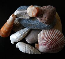 Shells and stones. by Vitta
