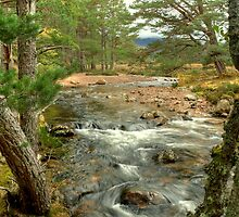Allt Druidh In The Rothiemurchus Forest by Jamie  Green