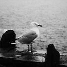 Lonely Seagull by DarrynFisher