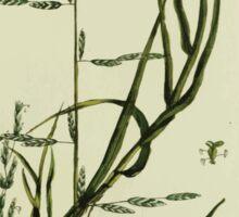 Plantarum Indigenarum et Exoticarum - Lukas Hochenleitter und Kompagnie 1788 - 151 Sticker