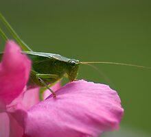 """Green Brush Grasshopper"" by ronlanier"