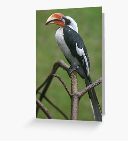 Is this my good side? Greeting Card