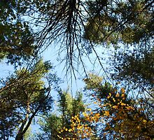 Trees all Around by AshleyNicoleH