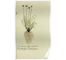 Plantarum Indigenarum et Exoticarum - Lukas Hochenleitter und Kompagnie 1788 - 438 Poster