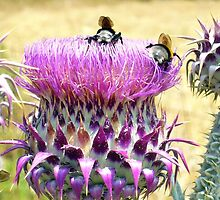 Busy Bees by djhopkins