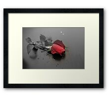 Sc Rose Framed Print