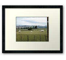 white cows!!!!!!!!!!! Framed Print