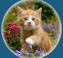 Cute ginger kitten in a garden by Katho Menden