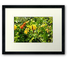 Community flower Framed Print
