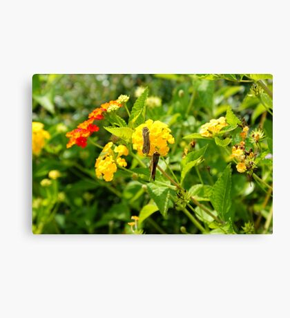 Community flower Canvas Print