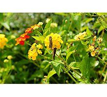 Community flower Photographic Print