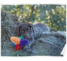 My Puppy Toys... Poster