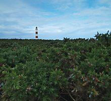 Sea of Gorse by WatscapePhoto