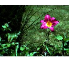 Color Delight Photographic Print