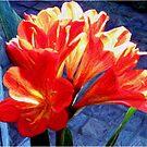 Clivia floral by patjila