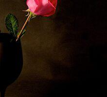 Rose in bloom by Jeffrey  Sinnock