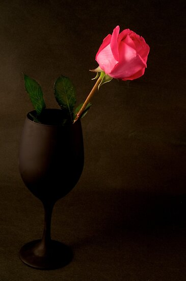 Pink Rose on a black back ground by Jeffrey  Sinnock