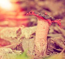 Forest Floor Poetry by lightwanderer