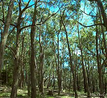 Forest in Summer,Grampians,Victoria,Australia by Max R Daely