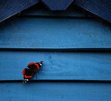 Butterfly & Blue by Paul Finnegan