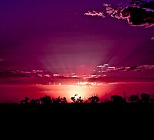 Think Pink - Port Hedland, Western Australia by Heather Linfoot
