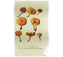 Plantarum Indigenarum et Exoticarum - Lukas Hochenleitter und Kompagnie 1788 - 244 Poster