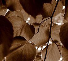 Leaves by Paul Finnegan