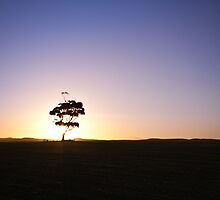 Lonely tree silhouette on open field at sunset  by lightwanderer