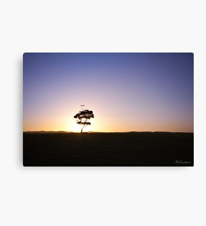 Lonely tree silhouette on open field at sunset  Canvas Print