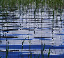 Water & Reeds by Paul Finnegan