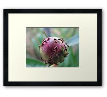 It's a Small World...After All Framed Print