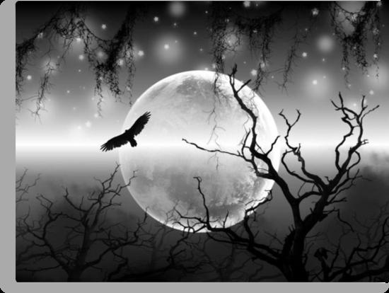 Night Flight by shutterbug2010