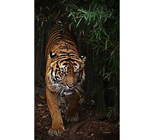 Tiger Might Photographic Print