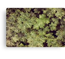 Psychedelic Leafs   Canvas Print