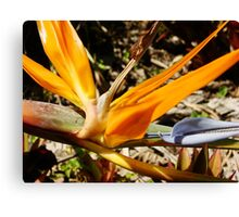 Bright Orange Bird of Paradise-(Macro) Canvas Print