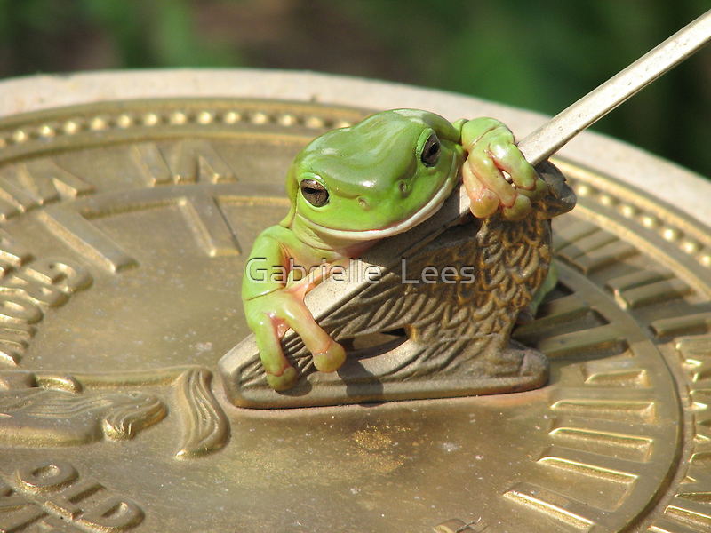 Frog Time by Gabrielle  Lees
