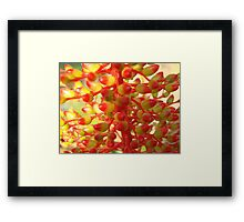 Yellow & Red Coral Flower-(Macro) Framed Print