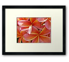 Yellow & Red Coral Flower-(Macro)Red & Orange Frangipani-(Floral Bunch) Framed Print