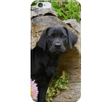 Lab puppy playing hide and seek iPhone Case/Skin
